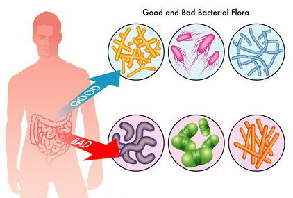 intestinal-flora